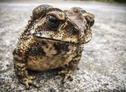 frog photo - eat your frogs!