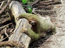 sloth - slow time image